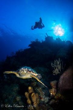 Turtle & Diver – Grand Cayman