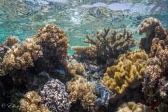 Shallow Reef – Wakatobi