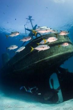 Kittiwake – Grand Cayman