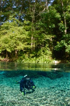 DIVER IN FRESH WATER: Photographed at Ginnie Springs, Florida
