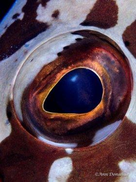 Grouper Eye - Little Cayman.