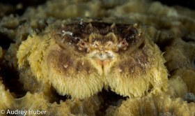 Small Crab - Anilao Philippines