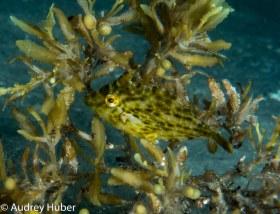 Juvenile fish - BHB Florida