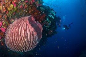 Barrel Sponge, Raja Ampat, Indonesia