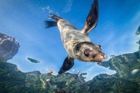 Young Sea Lion, La Paz, Mexico