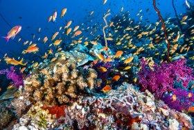 Reef Scene, Sudan