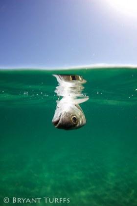 Recreational Fishing Impacts - Lake Worth, FL