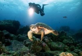 """Nancy and Turtle"" shot in the Galapagos, Ecuador"