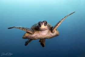 """""""Turtle Face"""" shot in Galapagos, Ecuador"""