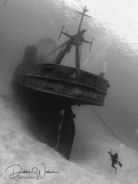 Kittiwake and diver, Cayman