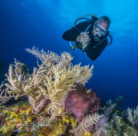Reef and diver, Bahamas