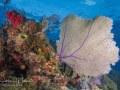 Reefscape, Bahamas