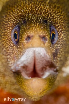 Moray Smile. © Elly Wray, All Rights Reserved.