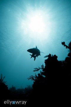 Shark Monochrome. © Elly Wray, All Rights Reserved.