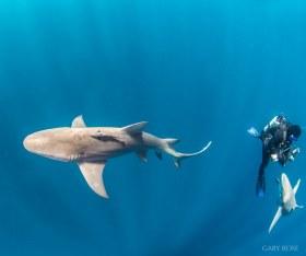 Three Dimensions, Lemon Sharks