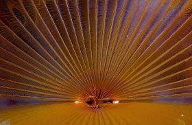 Radiant: Fan worm, St. Croix