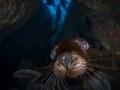 A California sea lion pup just looking extra cute! La Paz, Mexico