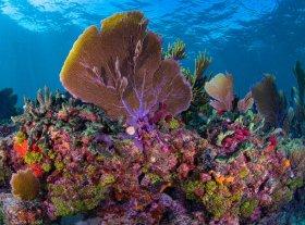 Reef Colors, Marathon, Florida