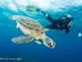 Ocean Explorers, Simpson Bay, St. Maarten