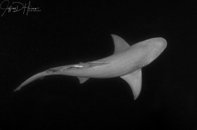 : Shark Below: This one is all about the graceful curves of the shark.