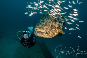 Diver and Goliath: I find divers to be more challenging to photograph well than the fish! This photo needed work with a crop, extensive backscatter removal and getting rid of another photographers camera that intruded into the frame. I only thought it worth the work because of the eye contact between my wife Ann and the Goliath Grouper.