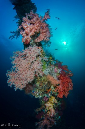 Soft Coral on the Liberty Wreck - Photographed in Bali, Indonesia