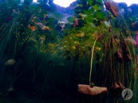 Monet's Underwater Lilies.