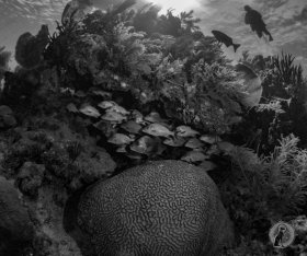 Black and White Reef landscape- Little Cayman.