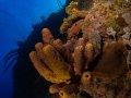 Bloody Bay Wall Marine Park- Little Cayman.
