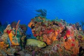 Reef Scene in Boynton Beach