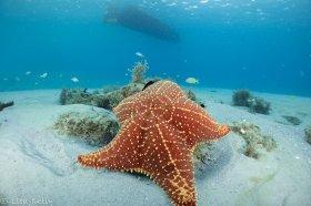 Starfish at BHB
