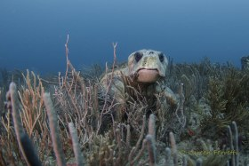 Gramps – I didn't intend to wake this lumbering loggerhead – but I had to photograph it !