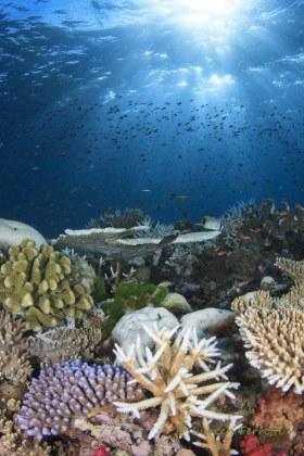 Reef scenes in Fiji are STUNNING !