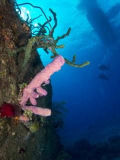 Wreck Growth; Nassau, Bahamas
