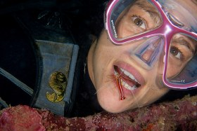 Dental Exam – Pacific Cleaner Shrimp, Solomon Islands