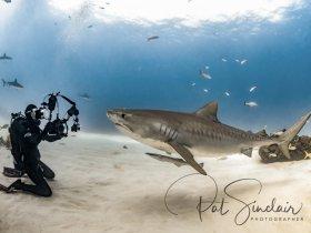 The Lady and the Shark.  Freeport Bahamas, Feb 2018