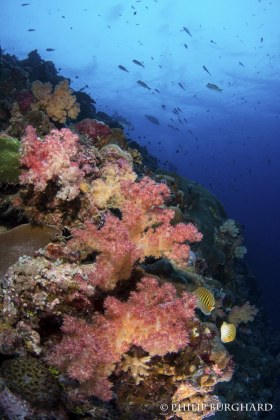 Palau Reefscape. © Philip Burghard. All Rights Reserved.