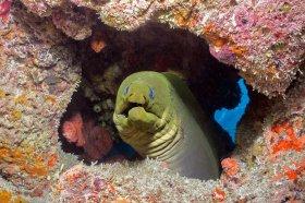 Green Moray – West Palm Beach, FL
