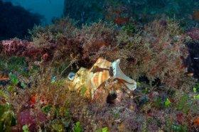 Hermit Crab – Jupiter, FL