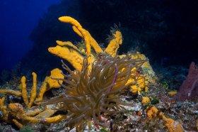 Anemone and Sponge – Cozumel
