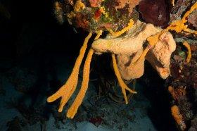 Sponges – Cozumel