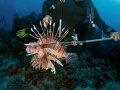 Lionfish – Cozumel