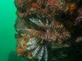 Lionfish - West Palm Beach, FL