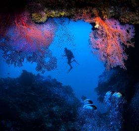 Cave with fans, Palau