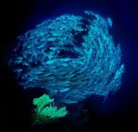Tornado of tuna