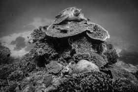 Turtle King, Komodo Island