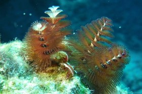 Tree farm - Who doesn't love Christmas trees with snow all around them? I found these Christmas tree worms in Grand Cayman in 2018.