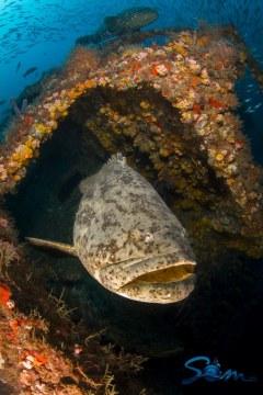 Castor Wreck Goliath