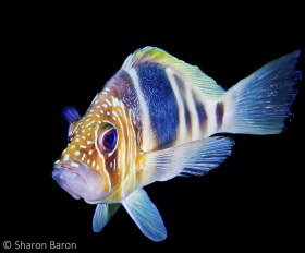 Barred Hamlet. © Sharon Baron, All Rights Reserved.