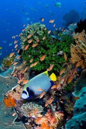 Komodo Reef Scene